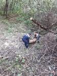 В Рогожинском парке Тулы навели порядок, Фото: 7