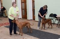 """Выставки собак в ДК """"Косогорец"""", Фото: 12"""