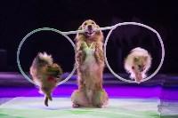 Тульский цирк, Фото: 27