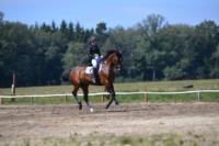 В Ясной поляне стартовал турнир по конному спорту, Фото: 54