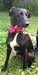 Собачья мода, Фото: 1