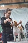 Выставка собак в Туле 26.01, Фото: 65