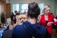 Всероссийская выставка собак 2017, Фото: 33