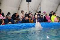 Дельфинарий в Туле, Фото: 20