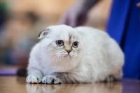 В Туле прошла выставка «Пряничные кошки» , Фото: 100