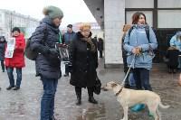 Более 8000 туляков требуют запретить убийство бездомных животных, Фото: 17