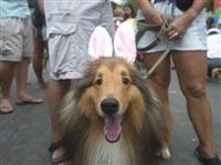 Собачий карнавал, Фото: 5