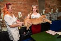 Выставка кошек в Искре, Фото: 58