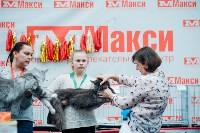 """Выставка """"Пряничные кошки"""" в ТРЦ """"Макси"""", Фото: 38"""