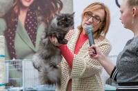 Выставка кошек в Туле, Фото: 22
