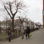 Кронированные деревья на ул.Октябрьской. 7.04.2015, Фото: 3