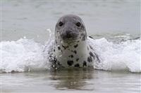 Жизнь тюленя: мечта!, Фото: 10