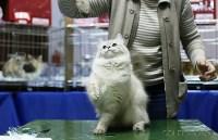 Выставка кошек, Фото: 8