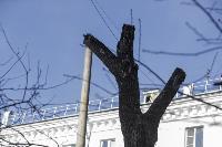 Кронирование деревьев в Туле: что можно, а чего нельзя?, Фото: 14