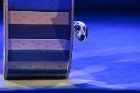 Цирковое шоу, Фото: 58