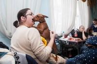 Всероссийская выставка собак 2017, Фото: 22
