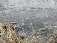 В пруду поселка Октябрьский в Туле из-за загрязнения гибнет рыба, Фото: 4