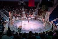 В Тульском цирке родился тигролев, Фото: 16