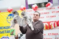 """Выставка """"Пряничные кошки"""" в ТРЦ """"Макси"""", Фото: 49"""