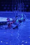 Aqua Show в Тульском цирке, Фото: 7
