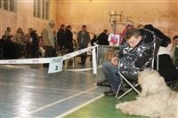 В Туле прошла всероссийская выставка собак, Фото: 23