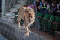 Новая программа в Тульском цирке «Нильские львы». 12 марта 2014, Фото: 4