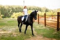 Новые лошади для конной полиции в Центральном парке, Фото: 2