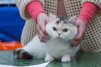 Выставка кошек в Туле, Фото: 58
