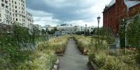 Цветочный джем: Тульское поле в Москве, Фото: 3