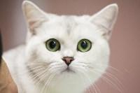 Выставка кошек в МАКСИ, Фото: 89