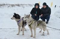 Праздник северных собак на Куликовом поле , Фото: 34