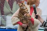 Выставка кошек в Туле, Фото: 30