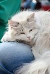 """Выставка """"Пряничные кошки"""" в ТРЦ """"Макси"""", Фото: 76"""