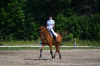 В Ясной поляне стартовал турнир по конному спорту, Фото: 94