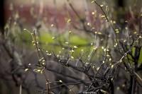 Весна 2020 в Туле: трели птиц и первые цветы, Фото: 23