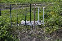 Бродячие собаки погубили рассаду тулячки и довели ее до сердечного приступа, Фото: 2