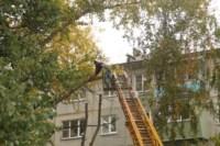 Кронирование тополей на ул. Калинина, Фото: 2