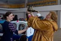 Выставка кошек в ГКЗ. 26 марта 2016 года, Фото: 78