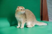 """Выставка """"Пряничные кошки"""" в ТРЦ """"Макси"""", Фото: 95"""