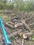 В Черни во время уборки на кладбище могилы завалили спиленными деревьями, Фото: 3