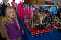Выставка кошек в ГКЗ. 26 марта 2016 года, Фото: 45