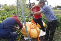 Гигантские тыквы из урожая семьи Колтыковых, Фото: 30