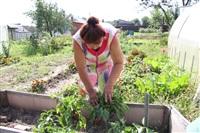 Вот это урожай!, Фото: 5