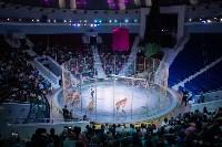 В Тульском цирке родился тигролев, Фото: 15
