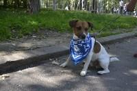 Фестиваль помощи животным в Центральном парке, Фото: 19