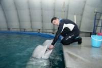 Дельфинарий в Туле, Фото: 23