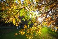 Золотая осень в Тульской области, Фото: 55