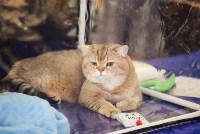 """Выставка """"Пряничные кошки"""". 15-16 августа 2015 года., Фото: 81"""
