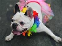 Собачий карнавал, Фото: 10