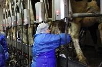 Конкурс профессионального мастерства среди операторов машинного доения коров, Фото: 36